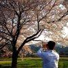 Yoshitomo Mori profile photo